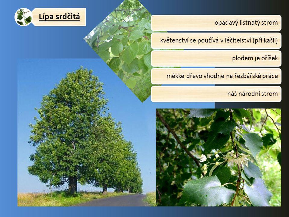 Lípa srdčitá opadavý listnatý stromkvětenství se používá v léčitelství (při kašli)plodem je oříšekměkké dřevo vhodné na řezbářské prácenáš národní str