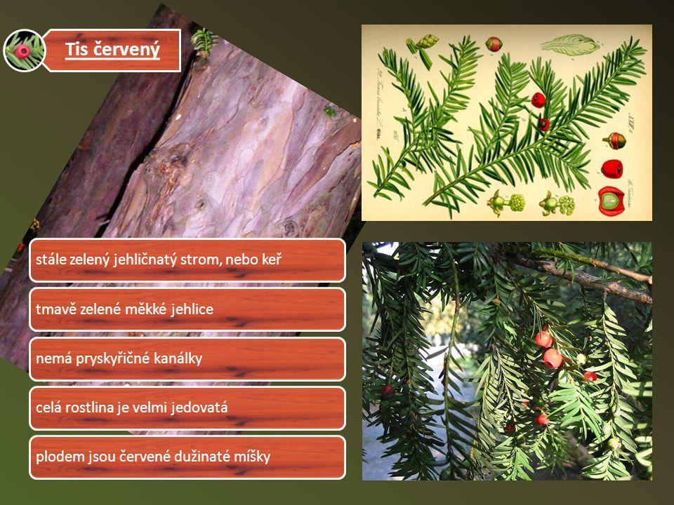 Tis červený stále zelený jehličnatý strom, nebo keřtmavě zelené měkké jehlicenemá pryskyřičné kanálkycelá rostlina je velmi jedovatáplodem jsou červené dužinaté míšky