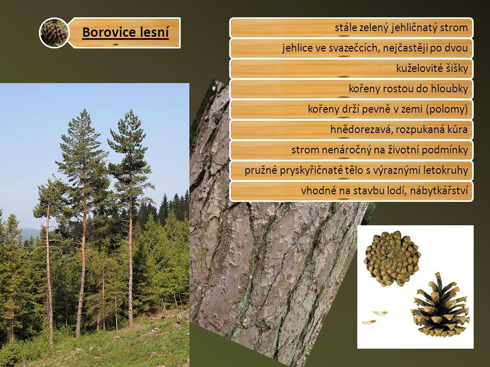 Borovice lesní stále zelený jehličnatý stromjehlice ve svazečcích, nejčastěji po dvoukuželovité šiškykořeny rostou do hloubkykořeny drží pevně v zemi (polomy)hnědorezavá, rozpukaná kůrastrom nenáročný na životní podmínkypružné pryskyřičnaté tělo s výraznými letokruhyvhodné na stavbu lodí, nábytkářství