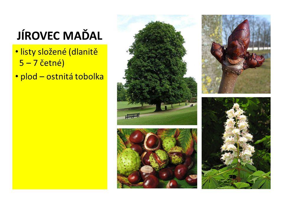JÍROVEC MAĎAL listy složené (dlanitě 5 – 7 četné) plod – ostnitá tobolka