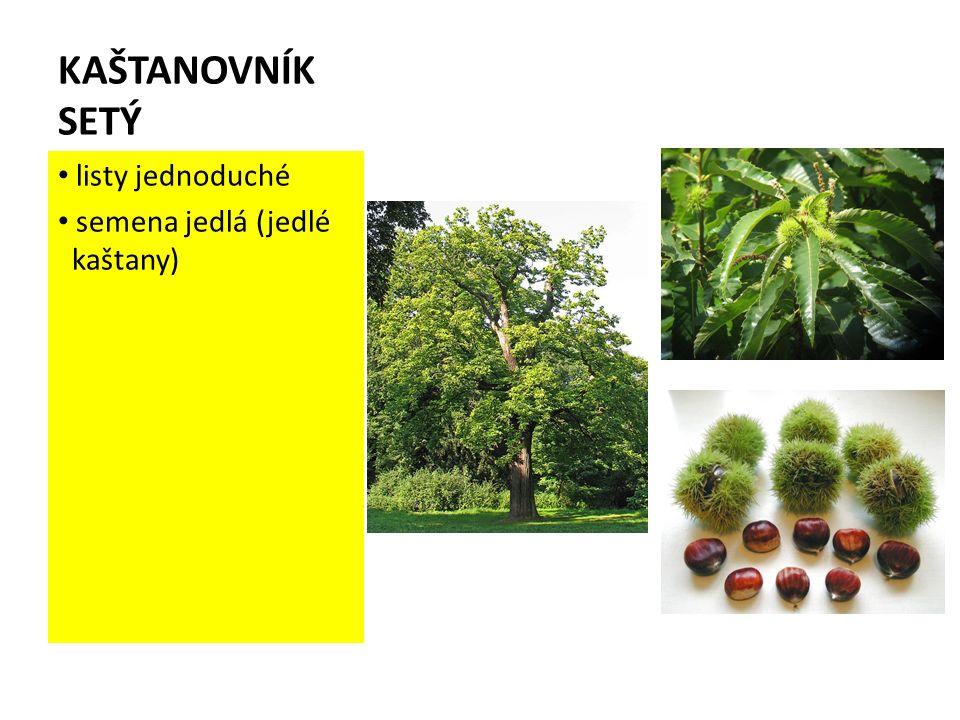KAŠTANOVNÍK SETÝ listy jednoduché semena jedlá (jedlé kaštany)
