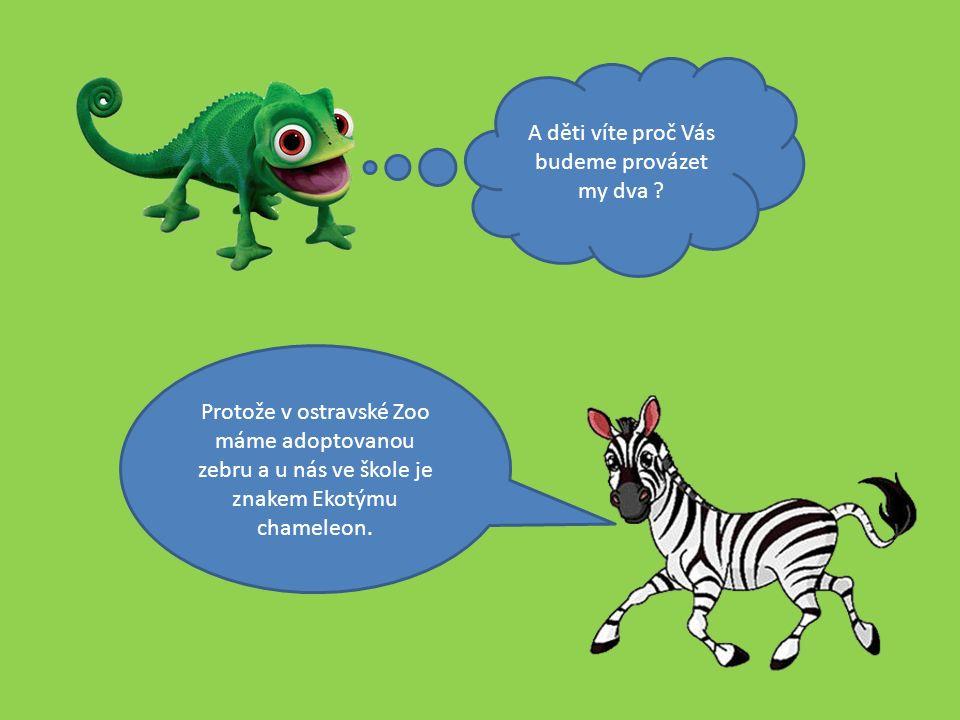 Protože v ostravské Zoo máme adoptovanou zebru a u nás ve škole je znakem Ekotýmu chameleon.