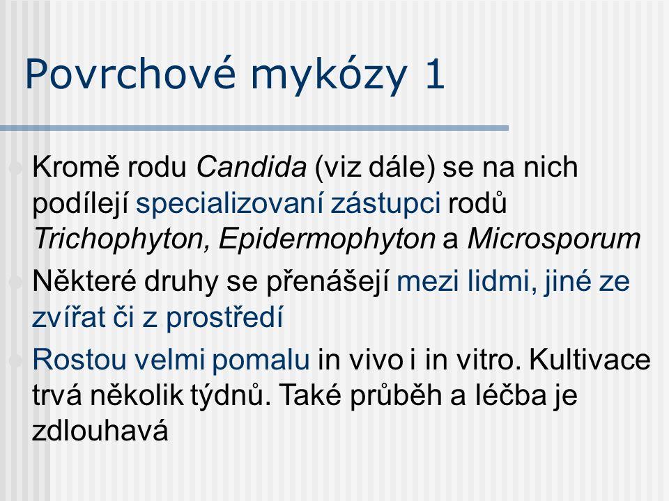 Klinicky významné houby Mikroskopické houby v těle působí Mykózy – houbové záněty Mykotoxikózy – toxické působení Mykoalergózy – alergie na houby Myce