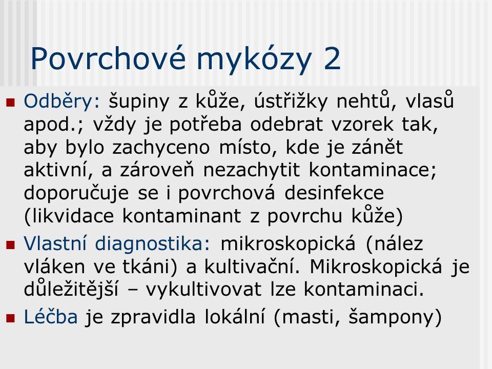 Povrchové mykózy 1 Kromě rodu Candida (viz dále) se na nich podílejí specializovaní zástupci rodů Trichophyton, Epidermophyton a Microsporum Některé d