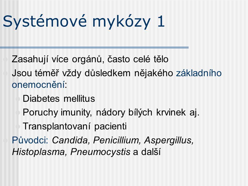 Někteří původci 1 Epidermophyton floccosum 2.Trichophyton rubrum 3.Trichophyton mentagrophytes 1 3 2