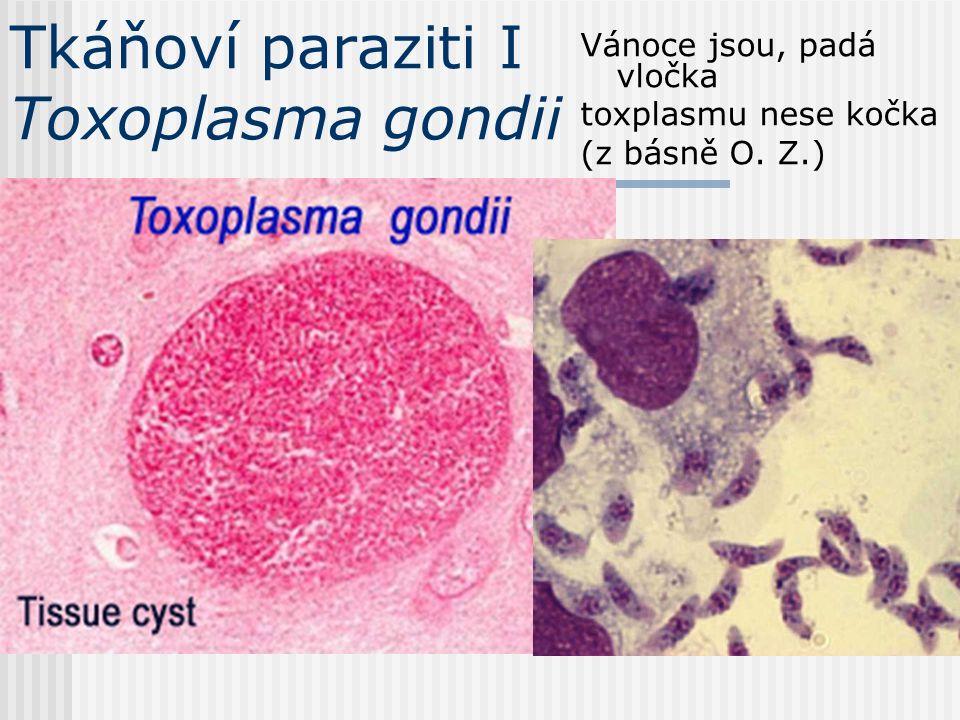 Krevní paraziti VII Filárie a trypanosoma – velikostní porovnání (ta kolečka jsou erytrocyty)