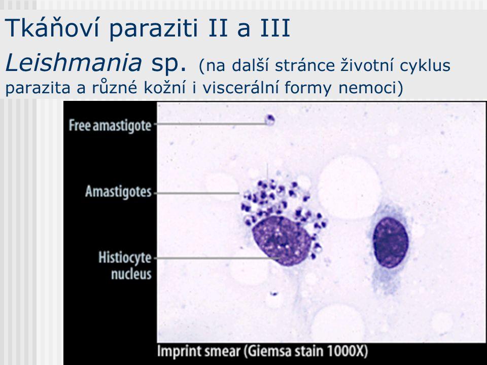 Tkáňoví paraziti I Toxoplasma gondii Vánoce jsou, padá vločka toxplasmu nese kočka (z básně O. Z.)