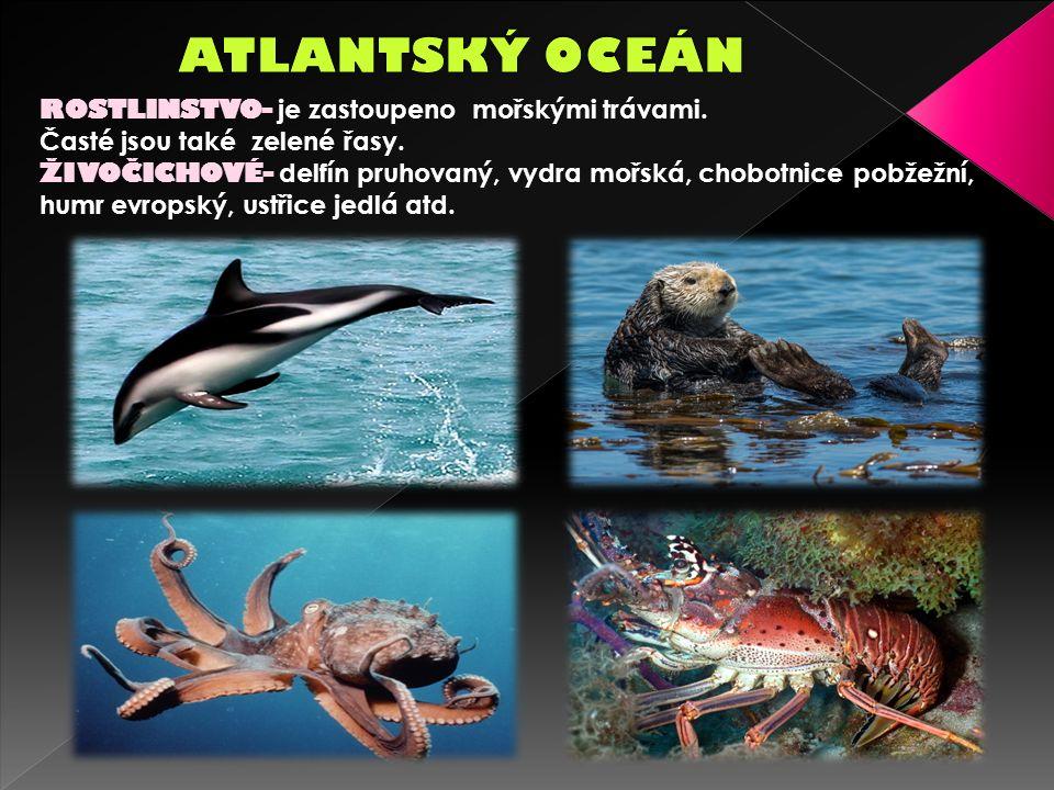ROSTLINSTVO- je zastoupeno mořskými trávami. Časté jsou také zelené řasy.