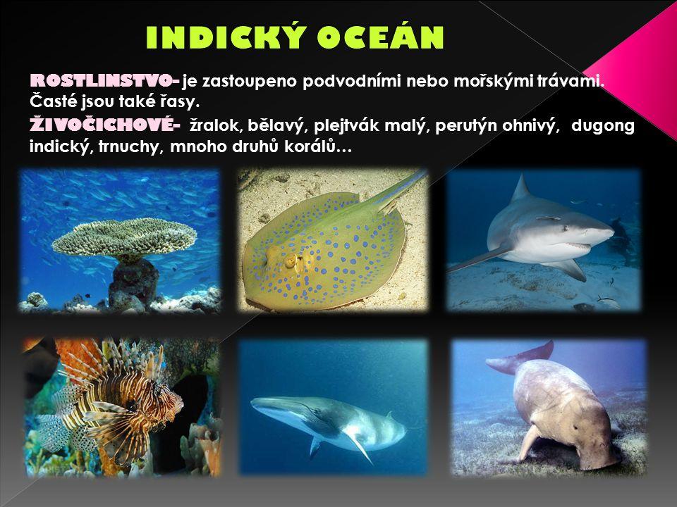 ROSTLINSTVO- je zastoupeno podvodními nebo mořskými trávami.