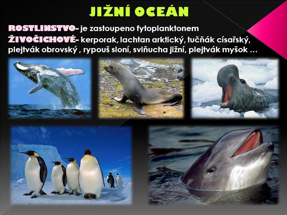 ROSTLINSTVO- je zastoupeno fytoplanktonem ŽIVOČICHOVÉ- kerporak, lachtan arktický, tučňák císařský, plejtvák obrovský, rypouš sloní, sviňucha jižní, plejtvák myšok …
