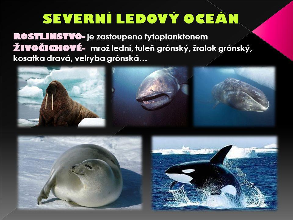 ROSTLINSTVO- je zastoupeno fytoplanktonem ŽIVOČICHOVÉ- mrož lední, tuleň grónský, žralok grónský, kosatka dravá, velryba grónská…
