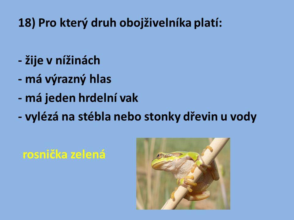 18) Pro který druh obojživelníka platí: - žije v nížinách - má výrazný hlas - má jeden hrdelní vak - vylézá na stébla nebo stonky dřevin u vody rosnička zelená
