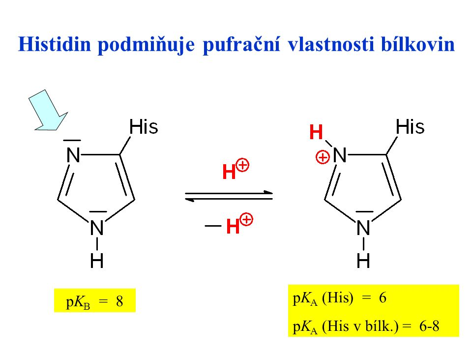 26 Histidin podmiňuje pufrační vlastnosti bílkovin pKB = 8pKB = 8 pK A (His) = 6 pK A (His v bílk.) = 6-8