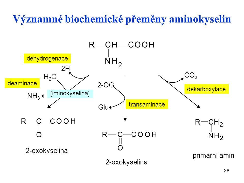38 deaminace primární amin RCHCOOH NH 2 NH 3 2H H2OH2O RCH 2 NH 2 RC COOH O dekarboxylace 2-oxokyselina RC COOH O transaminace 2-OG Glu CO 2 2-oxokyselina dehydrogenace Významné biochemické přeměny aminokyselin [iminokyselina]