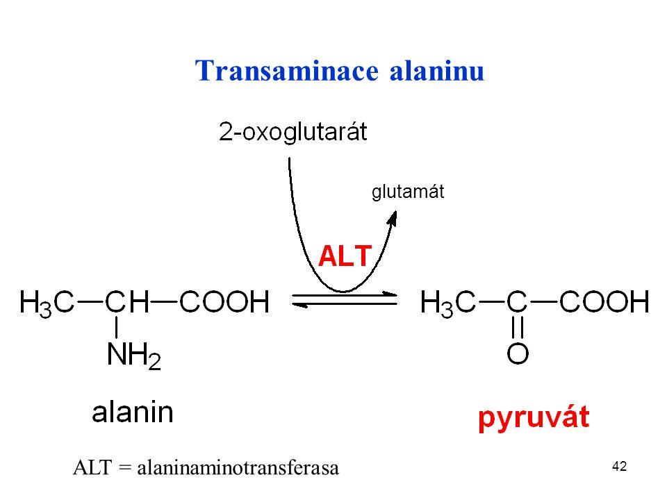 42 Transaminace alaninu ALT = alaninaminotransferasa glutamát