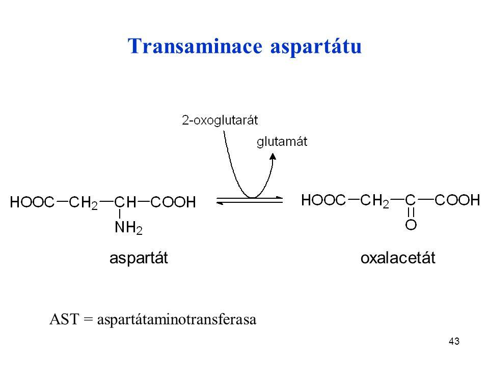 43 Transaminace aspartátu aspartát oxalacetát AST = aspartátaminotransferasa