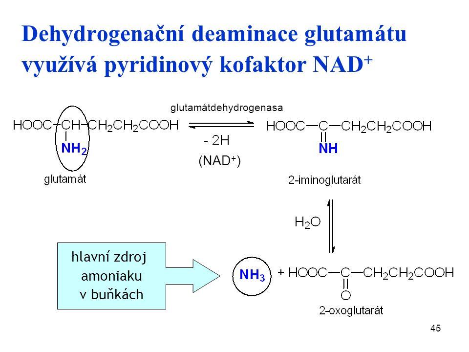 45 Dehydrogenační deaminace glutamátu využívá pyridinový kofaktor NAD + (NAD + ) hlavní zdroj amoniaku v buňkách glutamátdehydrogenasa