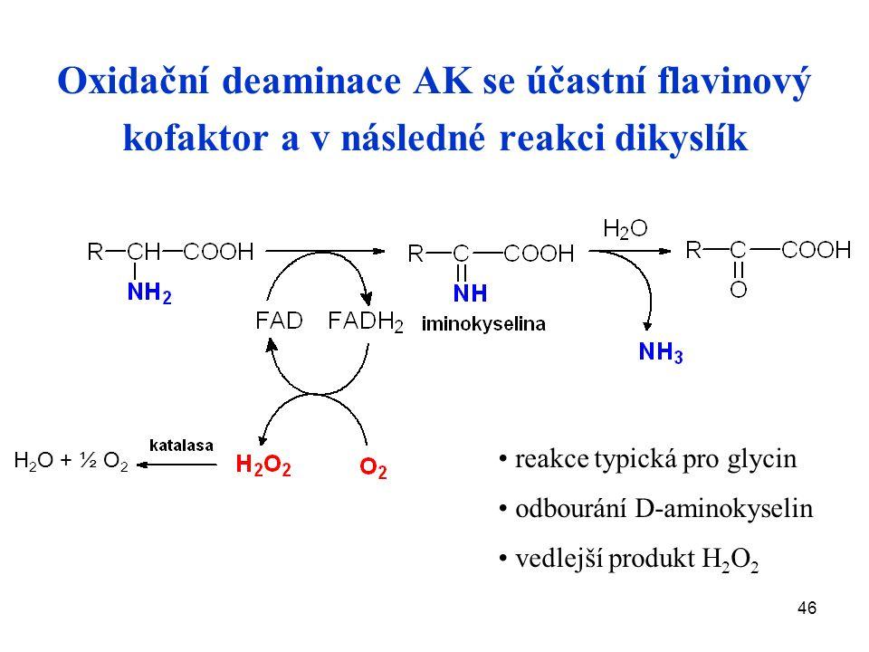 46 Oxidační deaminace AK se účastní flavinový kofaktor a v následné reakci dikyslík reakce typická pro glycin odbourání D-aminokyselin vedlejší produkt H 2 O 2 H 2 O + ½ O 2
