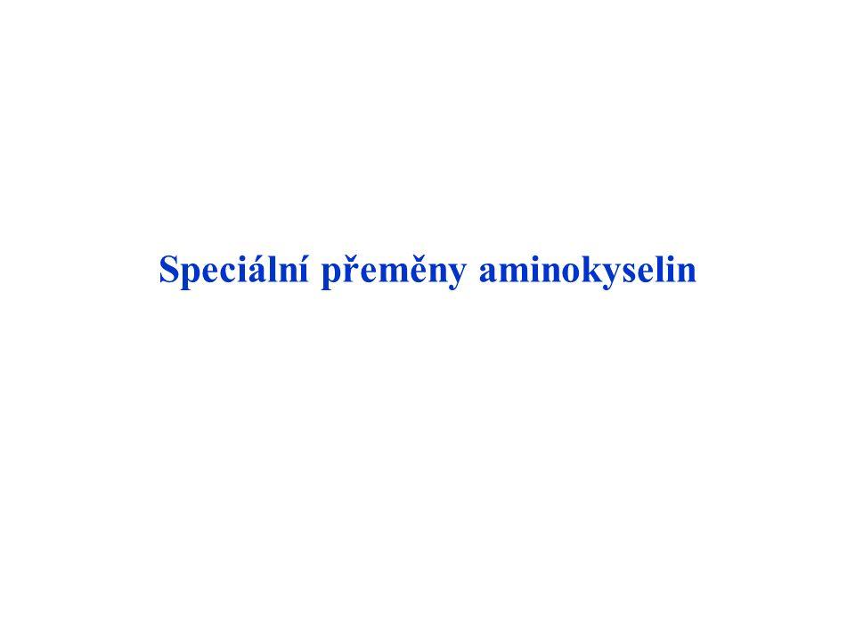 Speciální přeměny aminokyselin