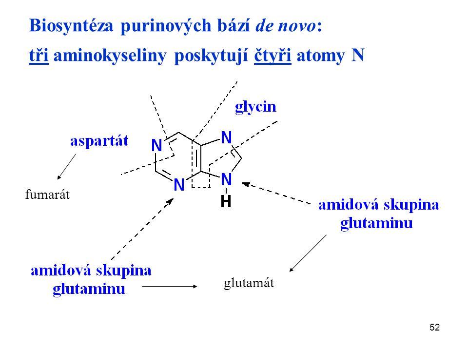 52 Biosyntéza purinových bází de novo: tři aminokyseliny poskytují čtyři atomy N fumarát glutamát