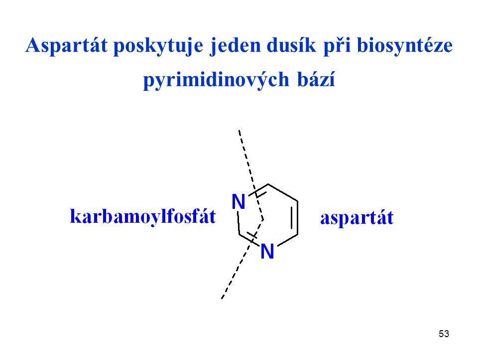 53 Aspartát poskytuje jeden dusík při biosyntéze pyrimidinových bází
