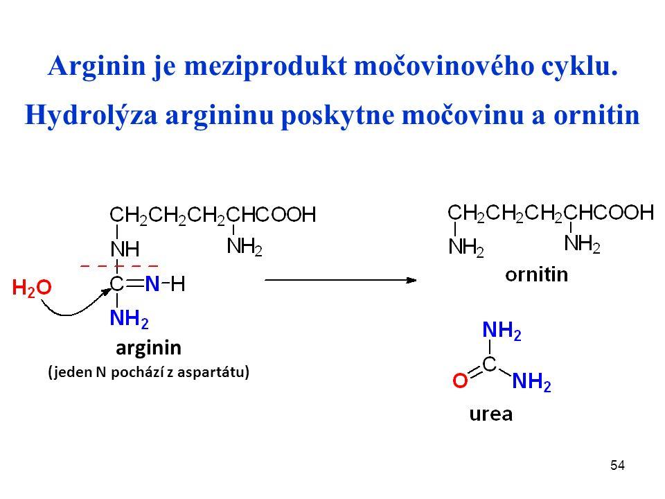 54 Arginin je meziprodukt močovinového cyklu.
