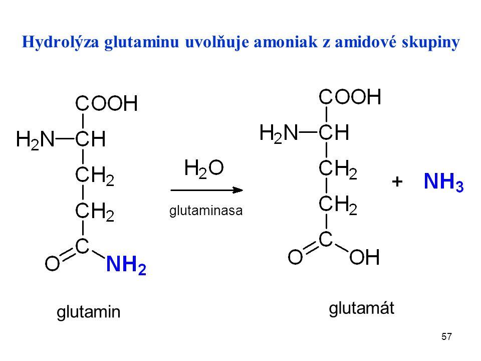 57 Hydrolýza glutaminu uvolňuje amoniak z amidové skupiny glutamát glutamin glutaminasa