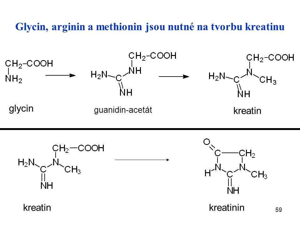 59 Glycin, arginin a methionin jsou nutné na tvorbu kreatinu glycin guanidin-acetát kreatin kreatinin