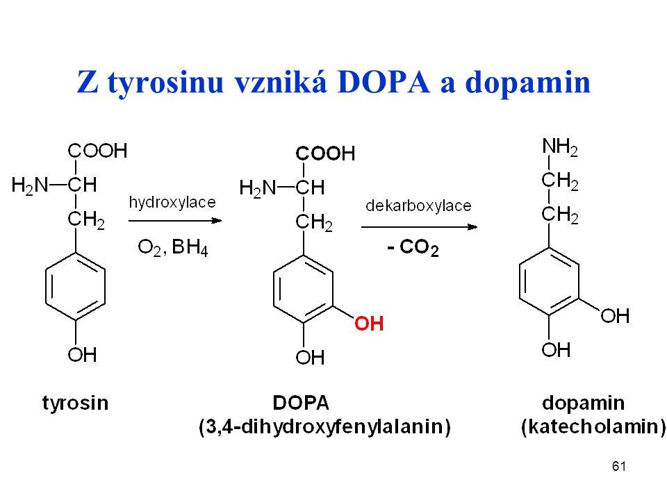 61 Z tyrosinu vzniká DOPA a dopamin