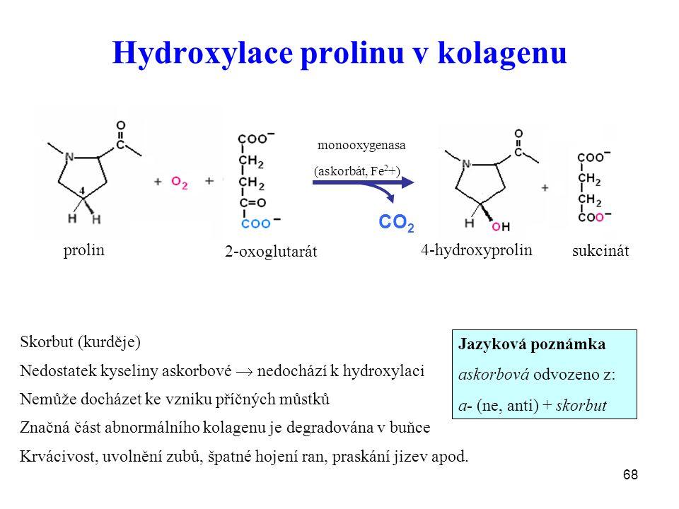 68 Hydroxylace prolinu v kolagenu prolin 2-oxoglutarát 4-hydroxyprolin sukcinát (askorbát, Fe 2 +) monooxygenasa CO 2 Skorbut (kurděje) Nedostatek kyseliny askorbové  nedochází k hydroxylaci Nemůže docházet ke vzniku příčných můstků Značná část abnormálního kolagenu je degradována v buňce Krvácivost, uvolnění zubů, špatné hojení ran, praskání jizev apod.