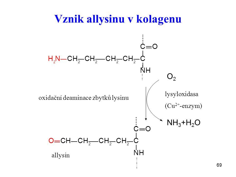 69 Vznik allysinu v kolagenu O2O2 NH 3 +H 2 O CH 2 CH 2 CH 2 CH 2 C C NH O H 2 N CHCH 2 CH 2 CH 2 C C NH O O lysyloxidasa (Cu 2+ -enzym) allysin oxidační deaminace zbytků lysinu