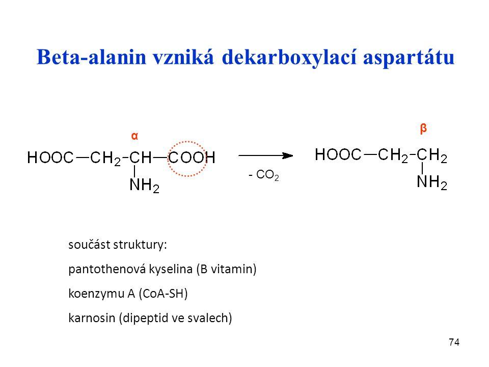 74 Beta-alanin vzniká dekarboxylací aspartátu - CO 2 β α součást struktury: pantothenová kyselina (B vitamin) koenzymu A (CoA-SH) karnosin (dipeptid ve svalech)
