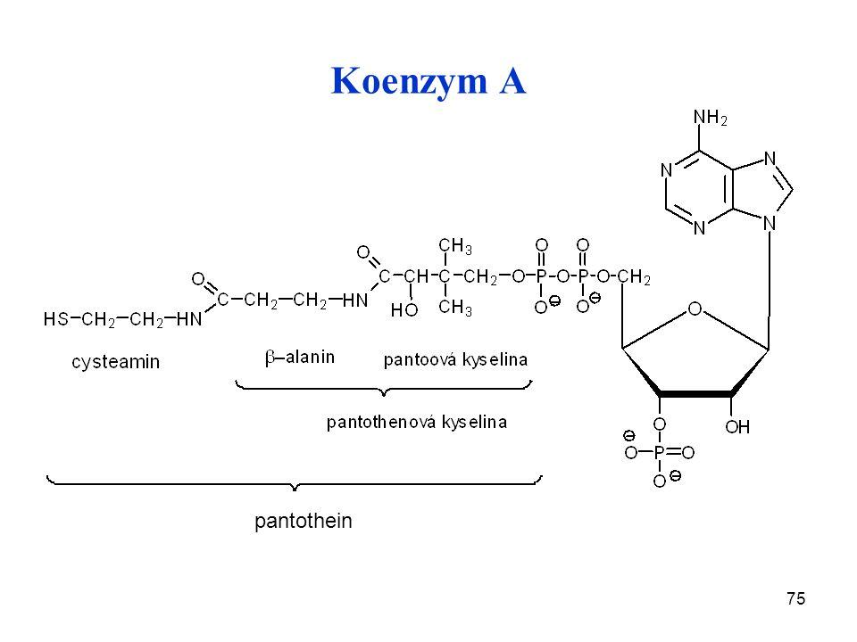 75 Koenzym A pantothein