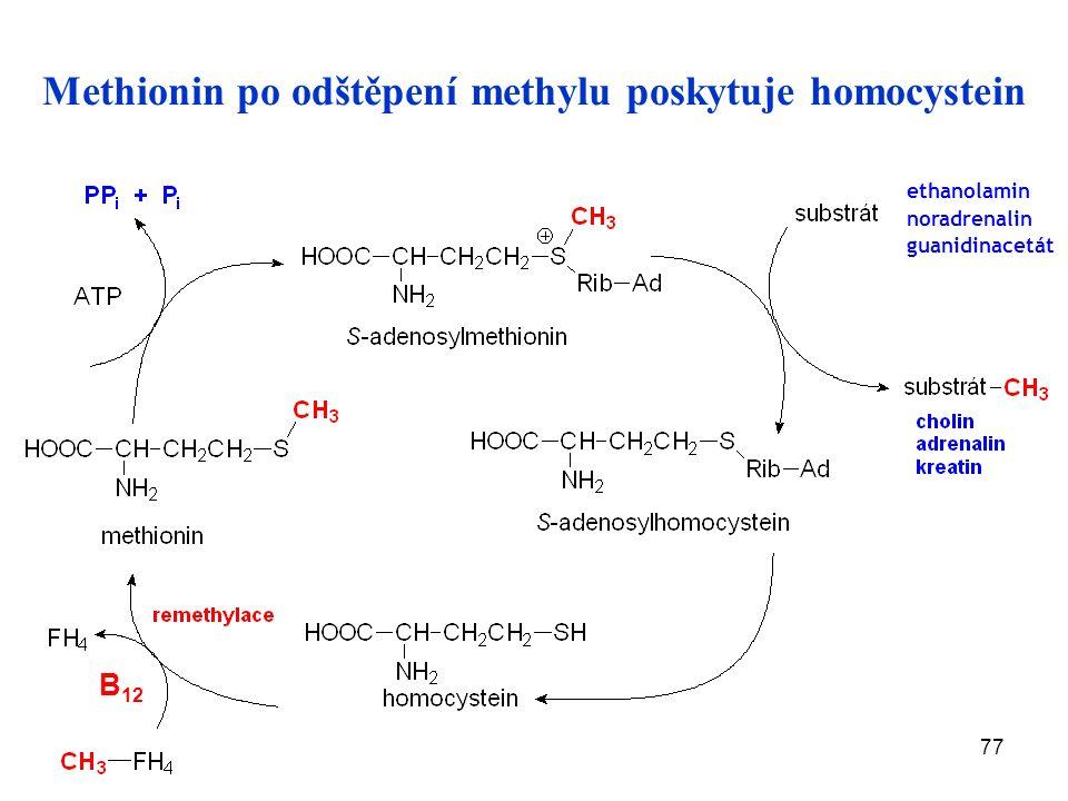 77 Methionin po odštěpení methylu poskytuje homocystein B 12 ethanolamin noradrenalin guanidinacetát