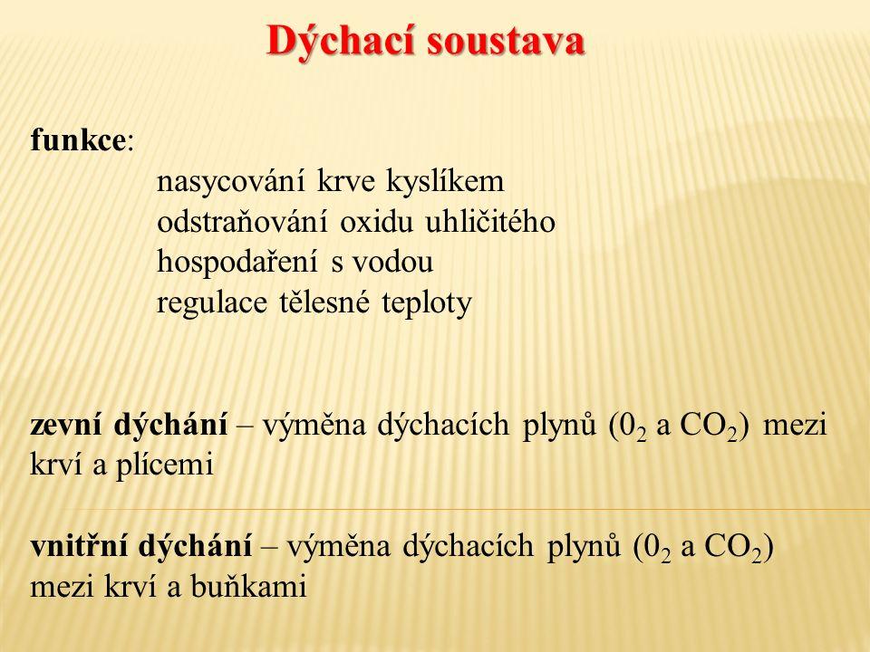 funkce: nasycování krve kyslíkem odstraňování oxidu uhličitého hospodaření s vodou regulace tělesné teploty zevní dýchání – výměna dýchacích plynů (0