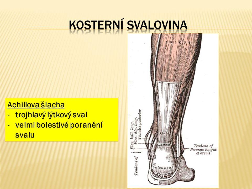 Achillova šlacha -trojhlavý lýtkový sval -velmi bolestivé poranění svalu