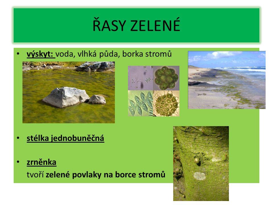 ŘASY ZELENÉ výskyt: voda, vlhká půda, borka stromů stélka jednobuněčná zrněnka tvoří zelené povlaky na borce stromů