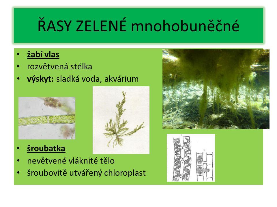 ŘASY ZELENÉ mnohobuněčné žabí vlas rozvětvená stélka výskyt: sladká voda, akvárium šroubatka nevětvené vláknité tělo šroubovitě utvářený chloroplast