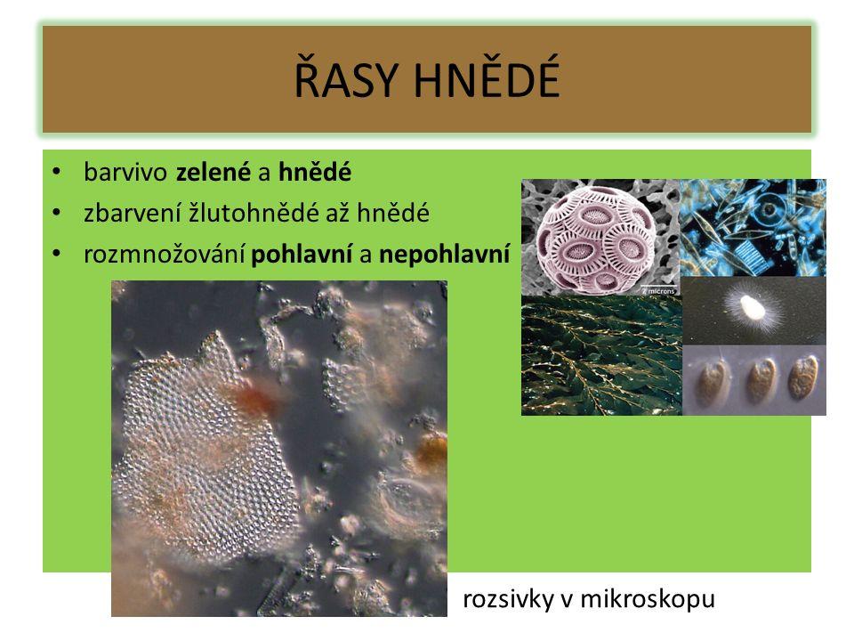 ŘASY HNĚDÉ barvivo zelené a hnědé zbarvení žlutohnědé až hnědé rozmnožování pohlavní a nepohlavní rozsivky v mikroskopu