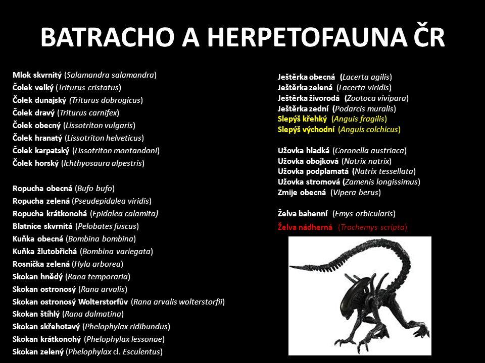BATRACHO A HERPETOFAUNA ČR Mlok skvrnitý (Salamandra salamandra) Čolek velký (Triturus cristatus) Čolek dunajský (Triturus dobrogicus) Čolek dravý (Triturus carnifex) Čolek obecný (Lissotriton vulgaris) Čolek hranatý (Lissotriton helveticus) Čolek karpatský (Lissotriton montandoni) Čolek horský (Ichthyosaura alpestris) Ropucha obecná (Bufo bufo) Ropucha zelená (Pseudepidalea viridis) Ropucha krátkonohá (Epidalea calamita) Blatnice skvrnitá (Pelobates fuscus) Kuňka obecná (Bombina bombina) Kuňka žlutobřichá (Bombina variegata) Rosnička zelená (Hyla arborea) Skokan hnědý (Rana temporaria) Skokan ostronosý (Rana arvalis) Skokan ostronosý Wolterstorfův (Rana arvalis wolterstorfii) Skokan štíhlý (Rana dalmatina) Skokan skřehotavý (Phelophylax ridibundus) Skokan krátkonohý (Phelophylax lessonae) Skokan zelený (Phelophylax cl.
