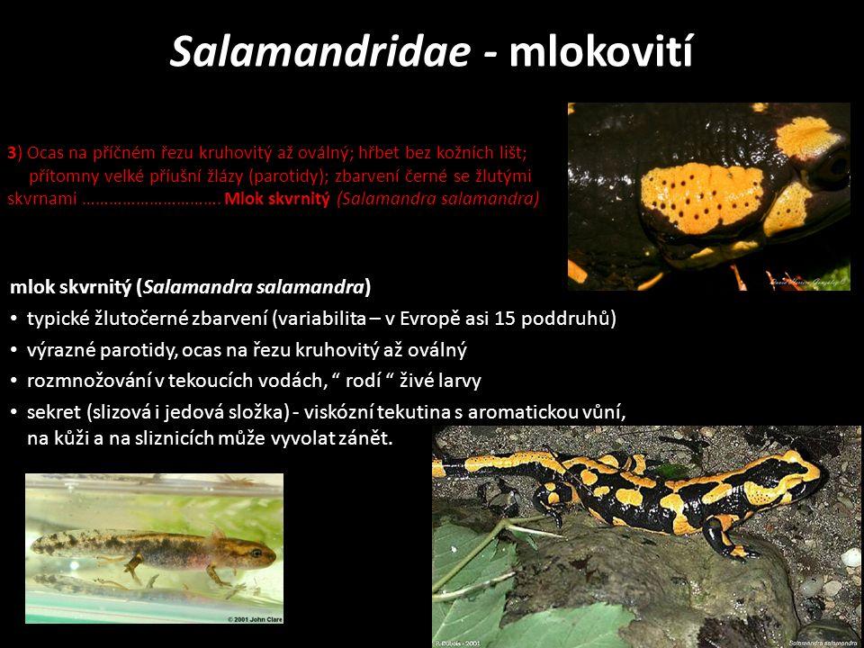 mlok skvrnitý (Salamandra salamandra) typické žlutočerné zbarvení (variabilita – v Evropě asi 15 poddruhů) výrazné parotidy, ocas na řezu kruhovitý až oválný rozmnožování v tekoucích vodách, rodí živé larvy sekret (slizová i jedová složka) - viskózní tekutina s aromatickou vůní, na kůži a na sliznicích může vyvolat zánět.