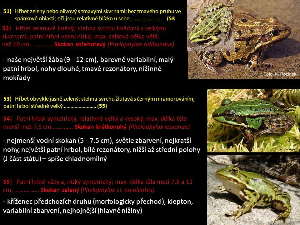 - naše největší žába (9 - 12 cm), barevně variabilní, malý patní hrbol, nohy dlouhé, tmavé rezonátory, nížinné mokřady - nejmenší vodní skokan (5 - 7.