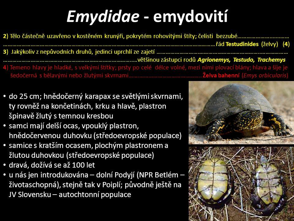 Emydidae - emydovití do 25 cm; hnědočerný karapax se světlými skvrnami, ty rovněž na končetinách, krku a hlavě, plastron špinavě žlutý s temnou kresbou samci mají delší ocas, vpouklý plastron, hnědočervenou duhovku (středoevropské populace) samice s kratším ocasem, plochým plastronem a žlutou duhovkou (středoevropské populace) dravá, dožívá se až 100 let u nás jen introdukována – dolní Podyjí (NPR Betlém – životaschopná), stejně tak v Poiplí; původně ještě na JV Slovensku – autochtonní populace 2) Tělo částečně uzavřeno v kostěném krunýři, pokrytém rohovitými štíty; čelisti bezzubé………………….......…… …………………………………………………………………………………………………………………………… řád Testudinides (želvy) (4) 3) Jakýkoliv z nepůvodních druhů, jedinci uprchlí ze zajetí ………………………….………………………………..……………… …………………………………………………………………………..…většinou zástupci rodů Agrionemys, Testudo, Trachemys 4) Temeno hlavy je hladké, s velkými štítky; prsty po celé délce volné, mezi nimi plovací blány; hlava a šíje je šedočerná s bělavými nebo žlutými skvrnami…….…………………………………..
