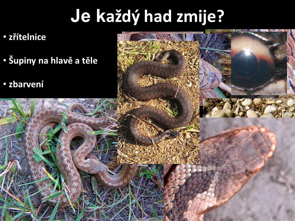 zřítelnice Šupiny na hlavě a těle zbarvení Biotop/místo nálezu Neznámého hada NIKDY nechytám!!! Je k aždý had zmije?