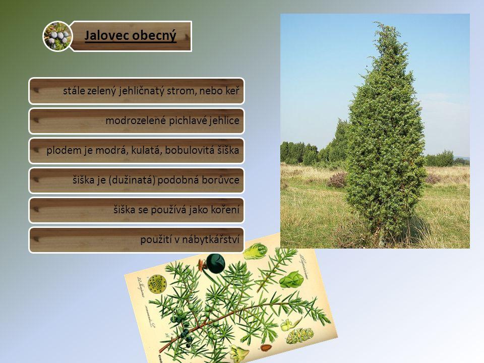 Jalovec obecný stále zelený jehličnatý strom, nebo keřmodrozelené pichlavé jehliceplodem je modrá, kulatá, bobulovitá šiškašiška je (dužinatá) podobná borůvcešiška se používá jako kořenípoužití v nábytkářství