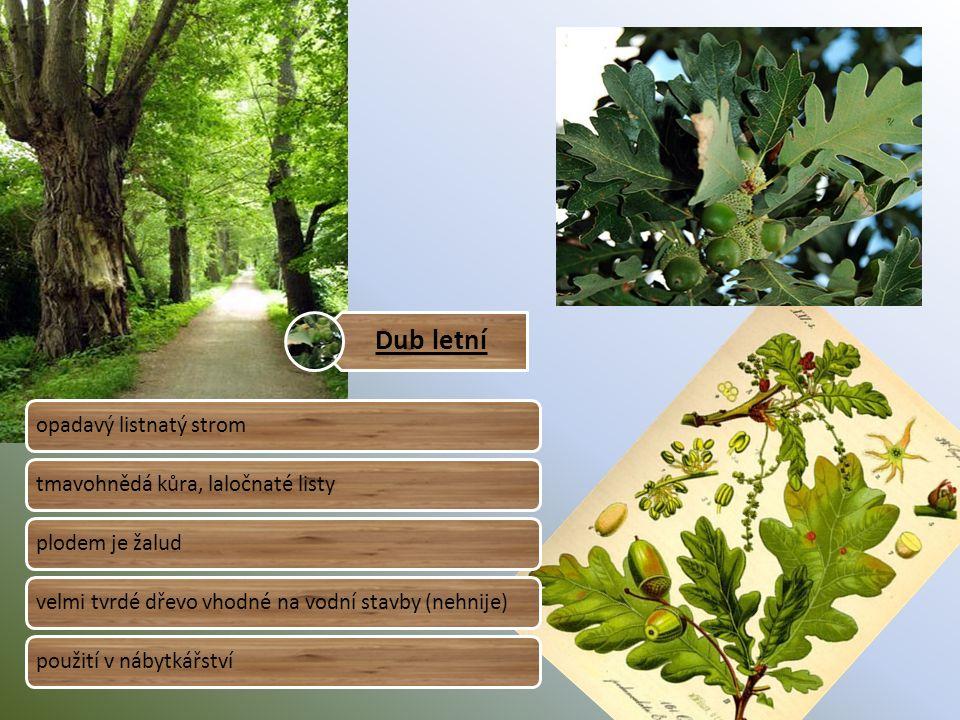 Dub letní opadavý listnatý stromtmavohnědá kůra, laločnaté listyplodem je žaludvelmi tvrdé dřevo vhodné na vodní stavby (nehnije)použití v nábytkářství