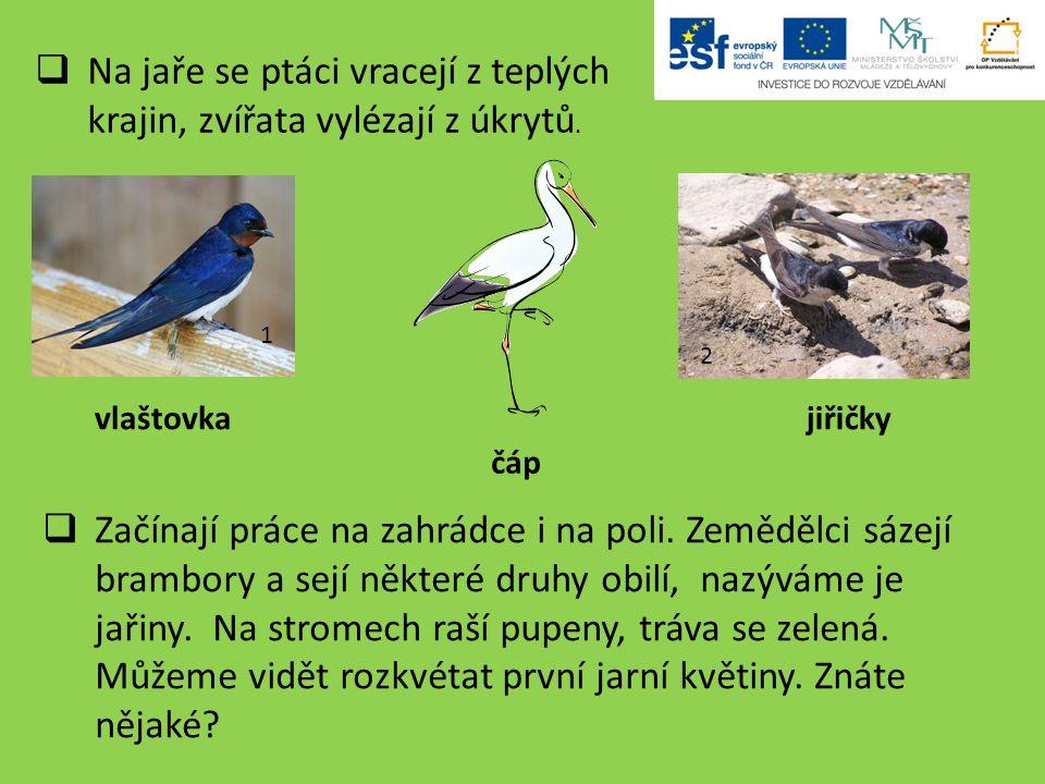  Na jaře se ptáci vracejí z teplých krajin, zvířata vylézají z úkrytů.