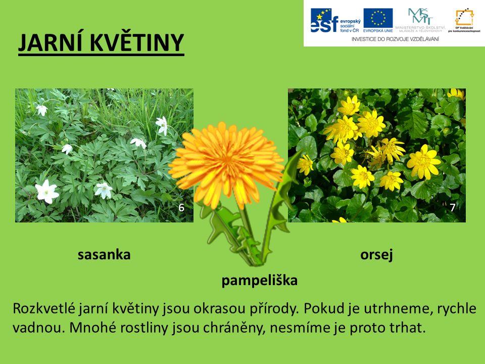 JARNÍ KVĚTINY pampeliška orsejsasanka 67 Rozkvetlé jarní květiny jsou okrasou přírody.