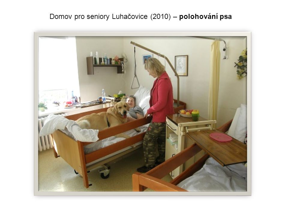 Domov pro seniory Luhačovice (2010) – polohování psa
