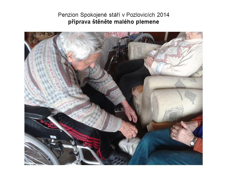 Penzion Spokojené stáří v Pozlovicích 2014 příprava štěněte malého plemene
